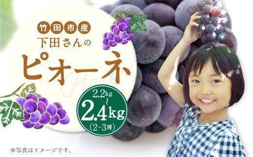 竹田市産 下田さんの ピオーネ 2~3房 (2.2㎏~2.4㎏) 大粒 ぶどう